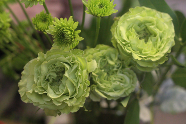 cabbage roses holly chapple holly chapple cabbage roses holly chapple the full bouquet blog. Black Bedroom Furniture Sets. Home Design Ideas