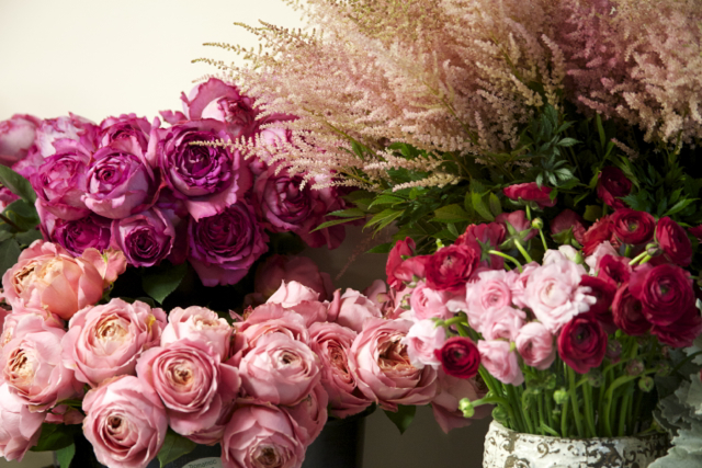 garden roses, pink cabbage roses