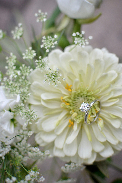 white zinnia, holly chapple flowers